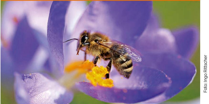 Dieses Foto stammt vom Flyer des Volksbegehrens - https://volksbegehren-artenvielfalt.de/wp-content/uploads/2019/01/Infoflyer_DIN_lang_ag_RZ-bea2-check-Screen_KORR0501.pdf